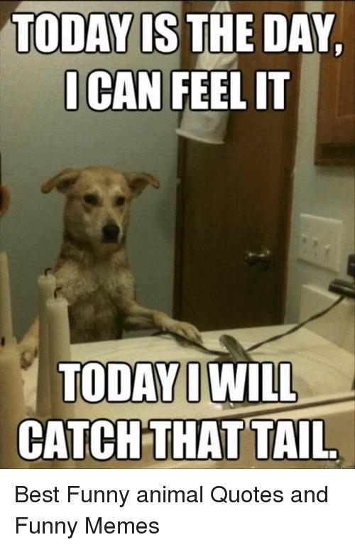 Best Memes Today Funny Image Joke 11
