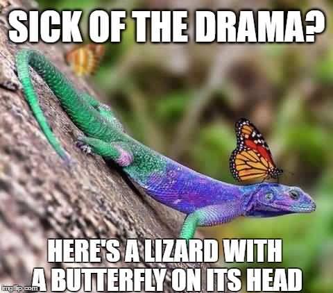 Butterfly Meme Funny Image Photo Joke 09