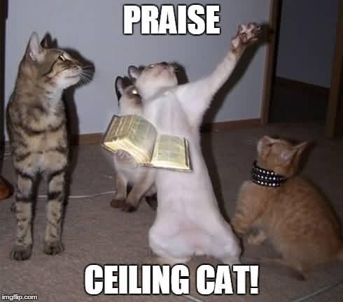 Ceiling Cat Meme Funny Image Photo Joke 10