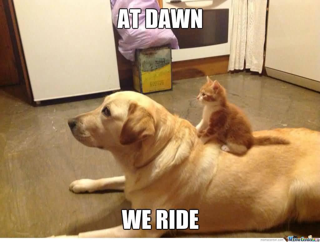 Dawn Meme Funny Image Photo Joke 12