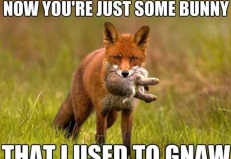 Fox Meme Funny Image Photo Joke 07