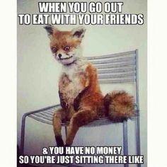 Fox Meme Funny Image Photo Joke 12