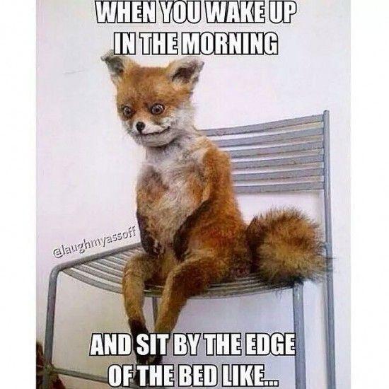 Fox Meme Funny Image Photo Joke 14