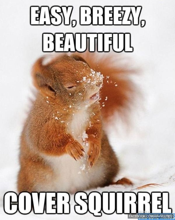 Funniest look a squirrel meme image