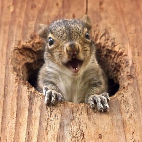 Funniest silly squirrel pictures jokes