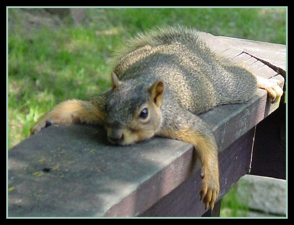 Funniest silly squirrel pictures meme joke