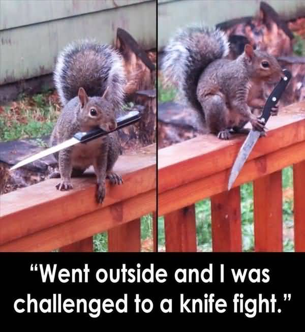 Funniest silly squirrel pictures wallpaper
