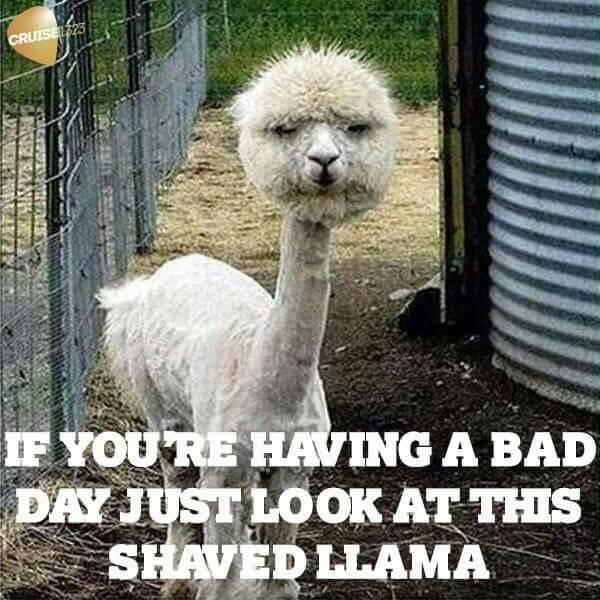 Funny I Love You Meme Joke Image 12