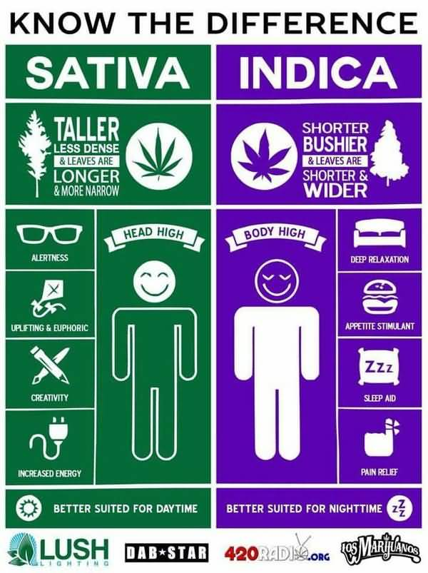 Hilarious medical marijuana meme image