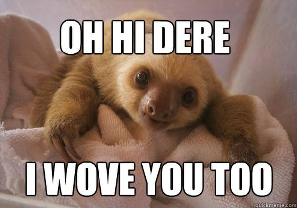 Hilarious sloth love meme joke