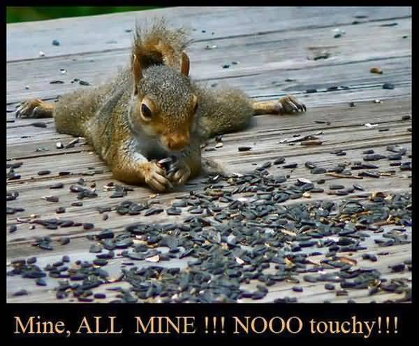 Hilarious squirrel images funny jokes