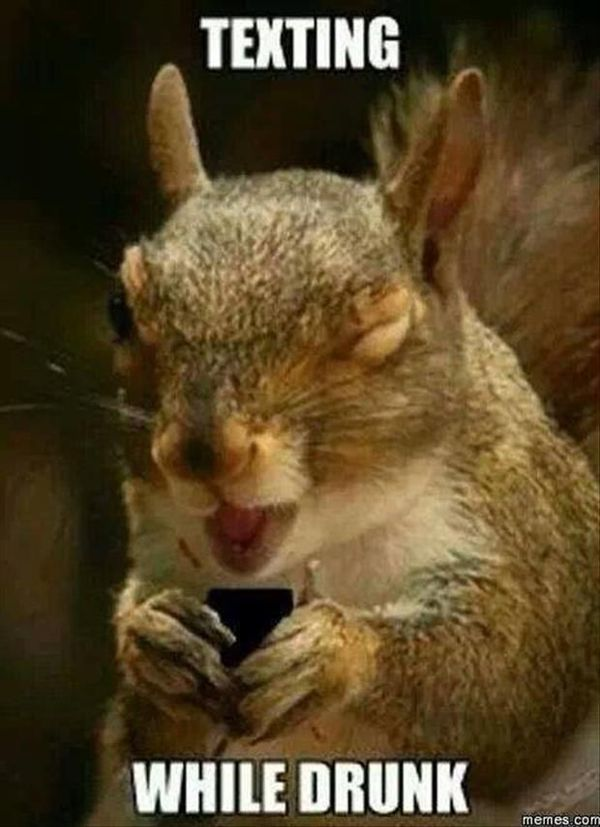 Hilarious squirrel images funny photo