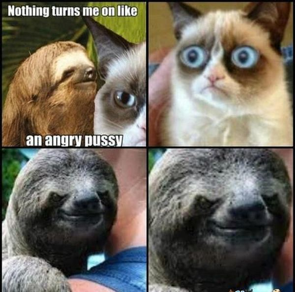 Hilarious usual dirty sloth memes image