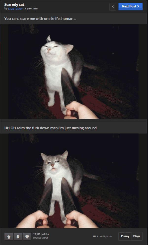 Knife Cat Meme Joke Image 02 | QuotesBae