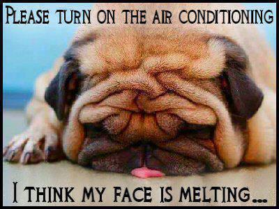Melting Meme Funny Image Photo Joke 03