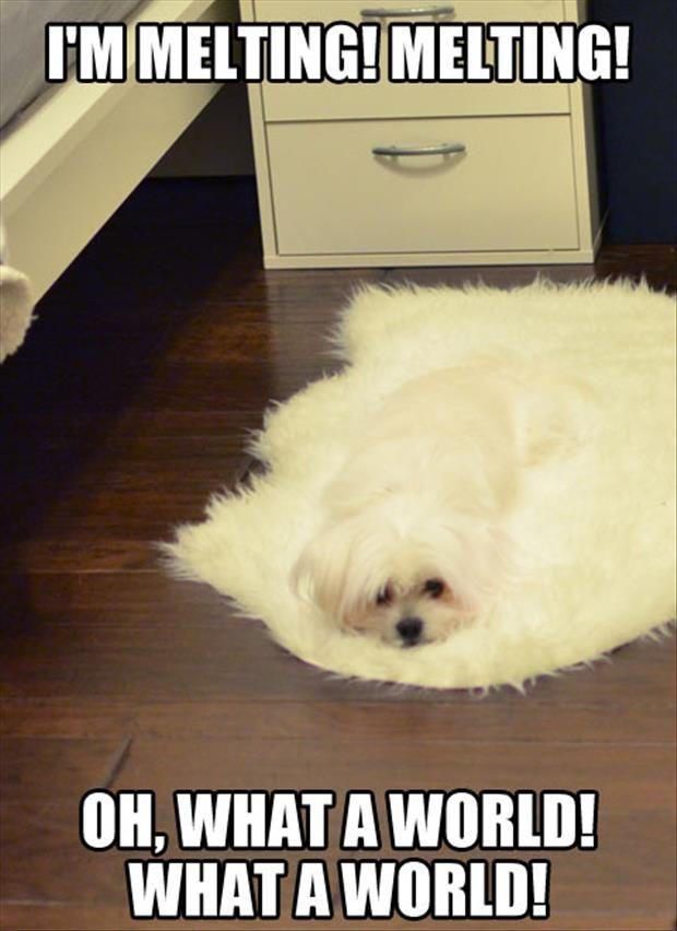 Melting Meme Funny Image Photo Joke 15