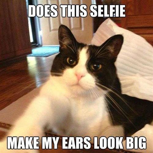 Monday Cat Meme Funny Image Photo Joke 01