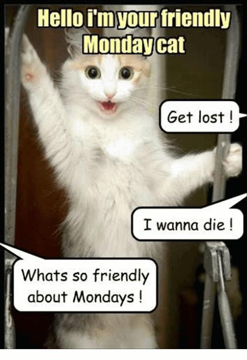 Monday Cat Meme Funny Image Photo Joke 02