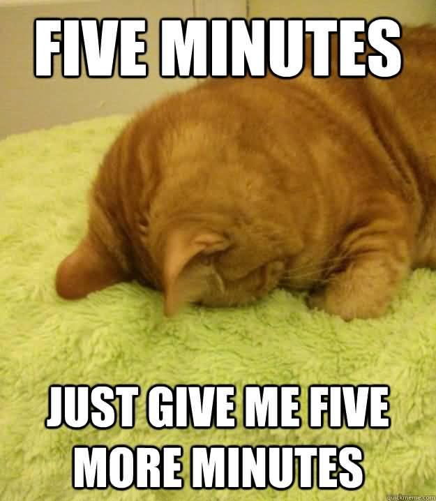 Monday Cat Meme Funny Image Photo Joke 03