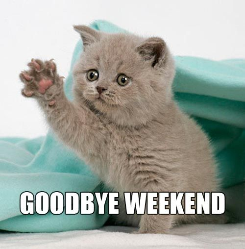 Monday Cat Meme Funny Image Photo Joke 04