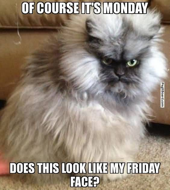Monday Cat Meme Funny Image Photo Joke 06