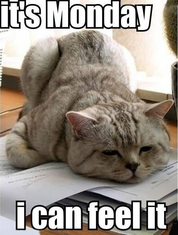Monday Cat Meme Funny Image Photo Joke 09