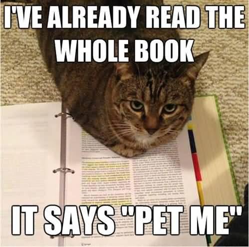 Monday Cat Meme Funny Image Photo Joke 10