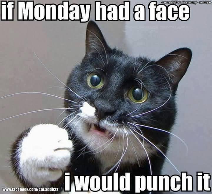 Monday Cat Meme Funny Image Photo Joke 11