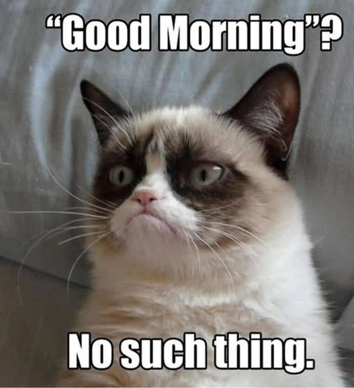 Monday Cat Meme Funny Image Photo Joke 12