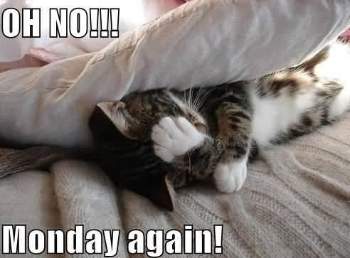 Monday Cat Meme Funny Image Photo Joke 13