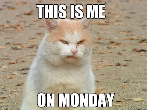 Monday Cat Meme Funny Image Photo Joke 15