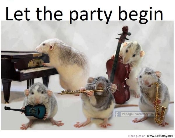 Most funny party pictures gifs