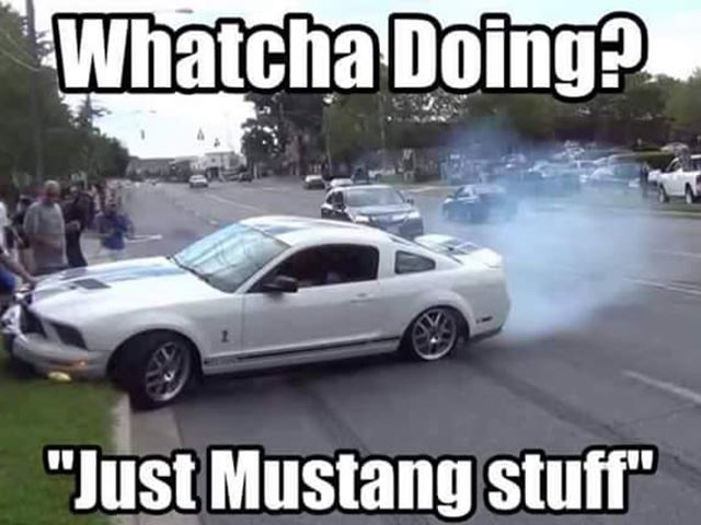 Mustang Meme Image Photo Joke 10