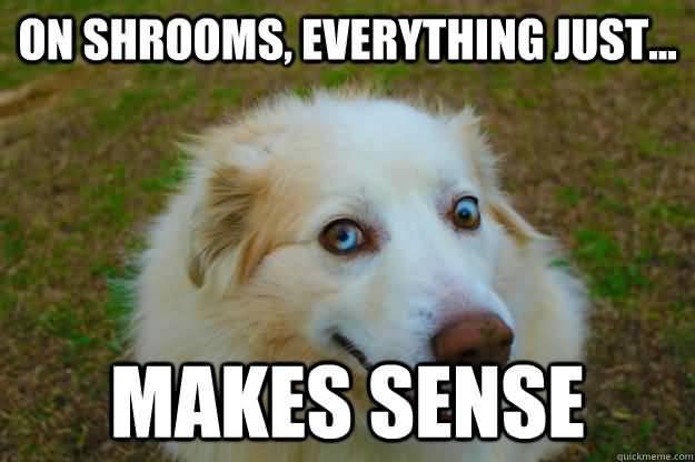 Shrooms Meme Funny Image Photo Joke 10