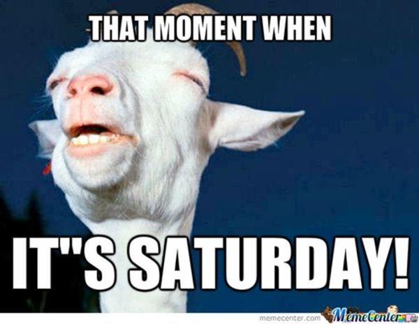 Very Funny Saturday Memes Joke