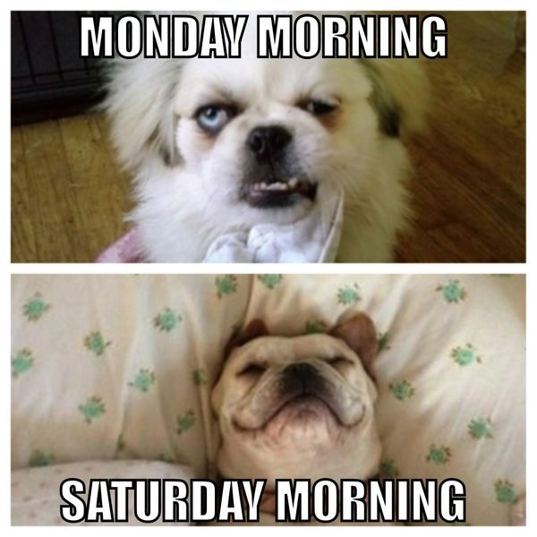 Very Funny Saturday Memes Jokes