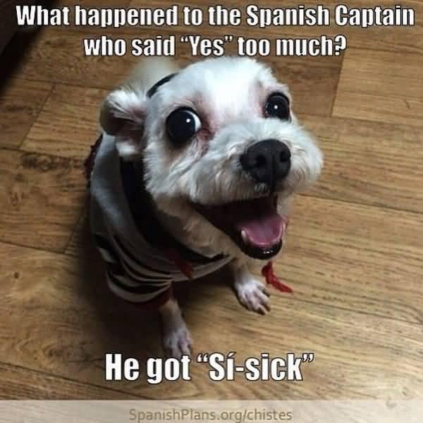 Very funny memes in espaol jokes