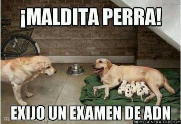 Very funny photos in spanish photo