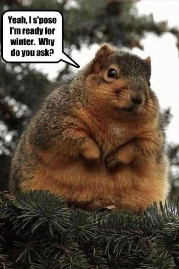 Very funny squirrel memes photo
