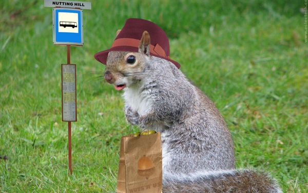 Very funny squirrel pictures jokes