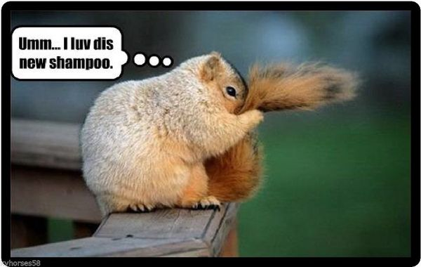 Very funny squirrel pictures meme