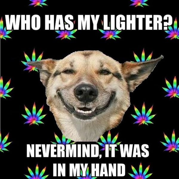 Very funny weed memes image