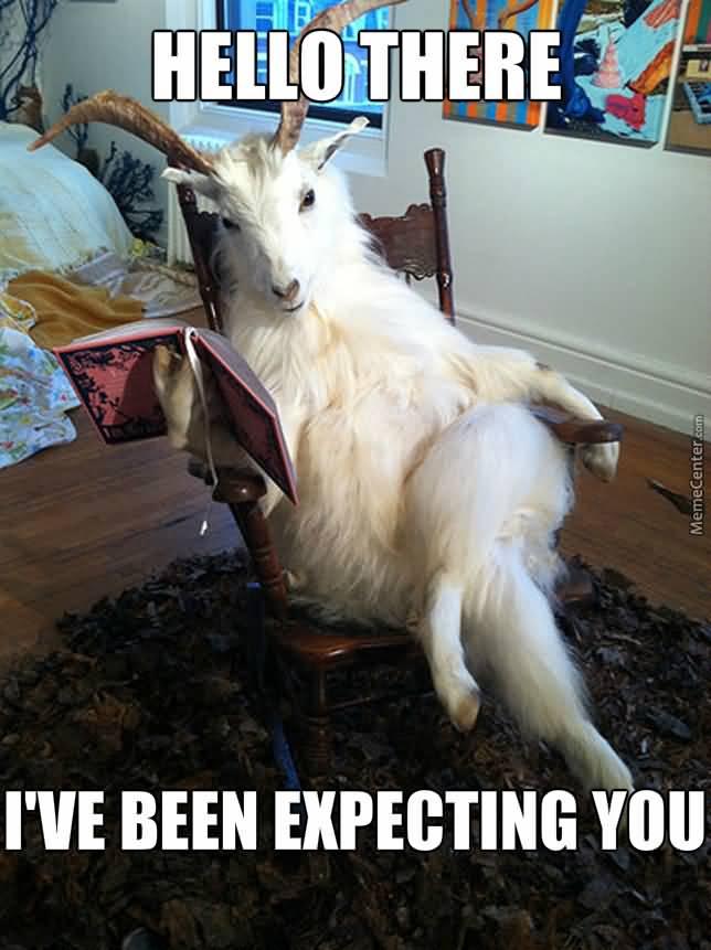 Funny Goat Meme Image Photo Joke 05