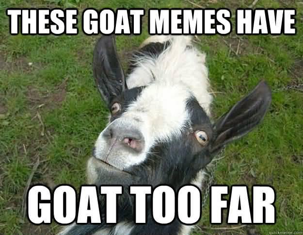 Funny Goat Meme Image Photo Joke 06