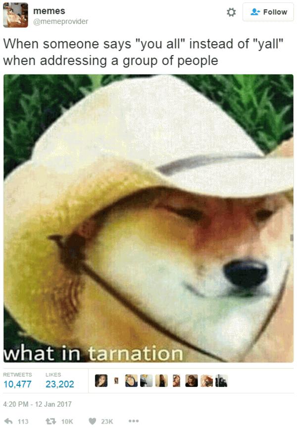Wot N Ternation Meme Funny Image Photo Joke 08
