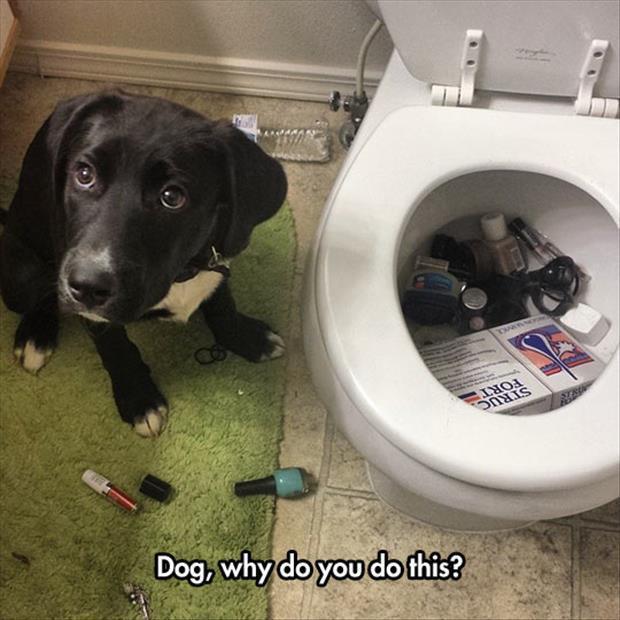 Dog Why Do You Do This