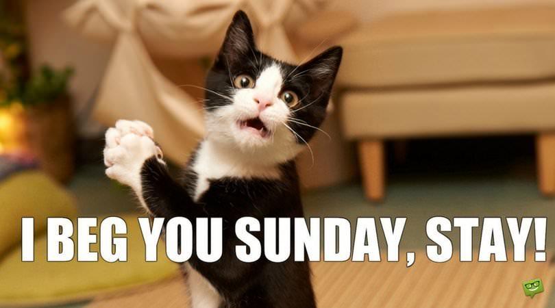 I Beg You Sunday, Stay!