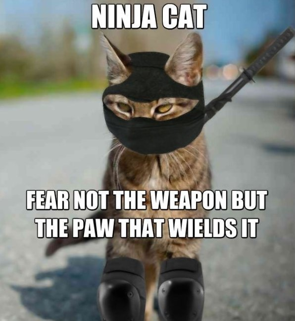 Funny Ninja Memes Ninja Cat Fear Not The Weapon But The Paw That Wields It Picture