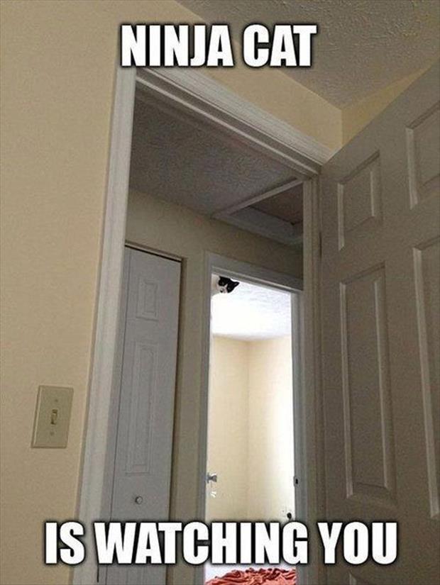 Funny Ninja Memes Ninja Cat Is Watching You Picture