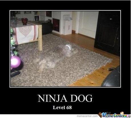 Funny Ninja Memes Ninja Dog Level 68 Image